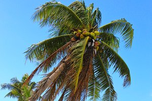 Sea coconut coast with blue sky