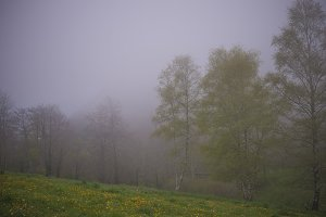 Mountain with fog in spring