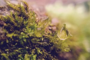 A drop in the moss