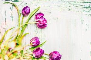 Springtime with purple tulips