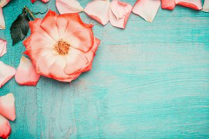Pink pale rose on turquoise