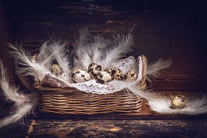 Basket with Quail eggs and feathers