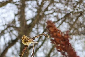lonely bird in winter cold day