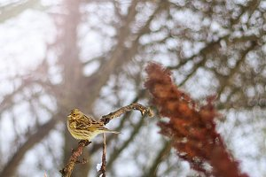 lonely bird in winter cold day with sunny hotspot