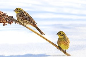 birds survive in the harsh snowy winter