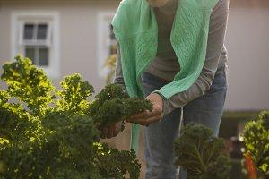 Senior woman gardening in the park