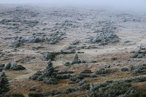 Hillside. A part of the slope is covered with a bush with frost.