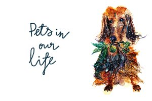 Pets in our life