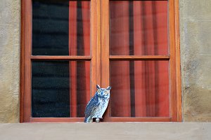 Paper Owl at the window