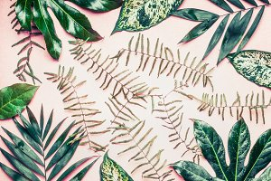 Tropical palm and fern leaves
