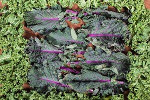 Frame of red and curly kale