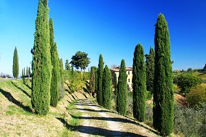 Cypress trees road in Tuscany