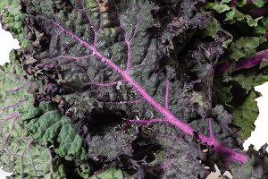 Red kale leaves