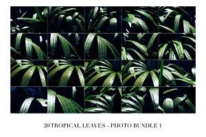 20 Tropical Leaves - Photo Bundle 1