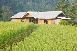House and rice fields