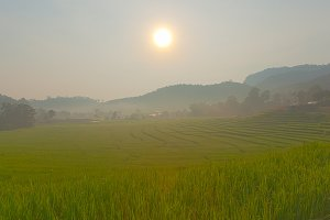 rice field on mountain.
