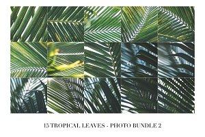 15 Tropical Leaves - Photo Bundle 2