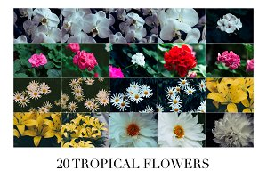 20 Tropical Flowers - Photo Bundle 1