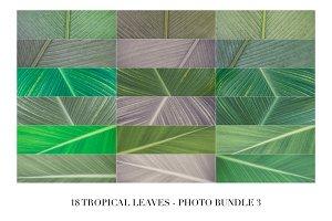 18 Tropical Leaves - Photo Bundle 3