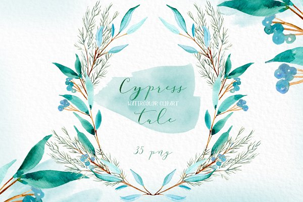 Cypress. Watercolor clipart