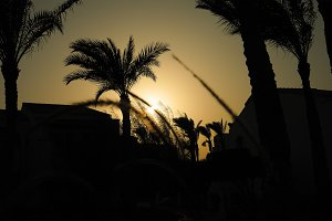 Spikes and palm trees silhouette at the sunset