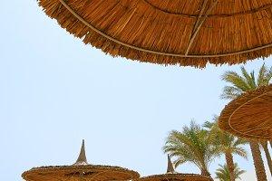 Tropical beach and the beach sunshades umbrellas