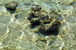 Sea bottom under the clear water