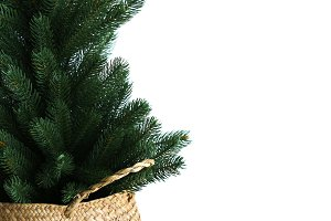 Pine Tree in Basket