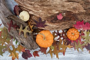 Autumn Decor with Drift Wood