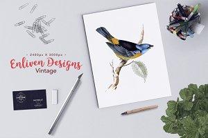 Bird Clipart Blue-Yellow Tanager