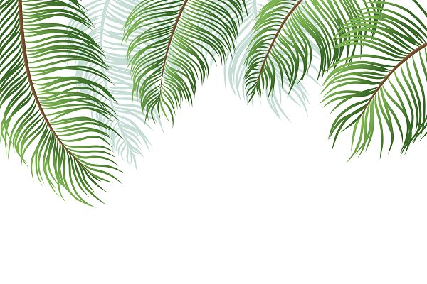 Palm leaves on white background