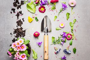Gardening flat lay with shovel