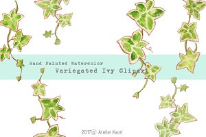 Variegated Ivy Clipart
