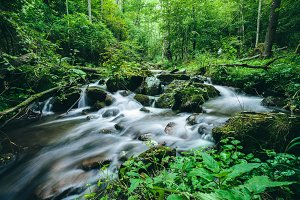 River in green forest