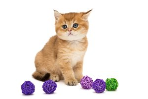 Kitten and colorful balls