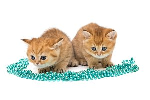 Two little ginger kitten