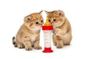 Two little red kitten and bottle