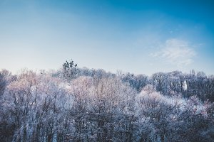 Frosty winter landscape in snowy forest