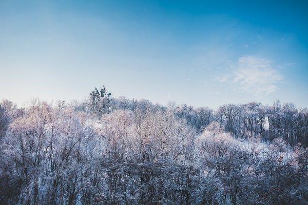 Frosty winter landscape in snowy fo…