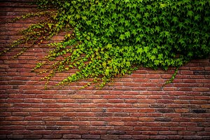 Old red brick wall texture and green leaf