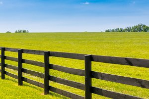 Green pastures of horse farms.
