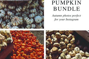Pumpkin Stock Photo Bundle