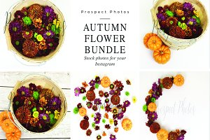 Autumn Flower Stock Photo Bundle