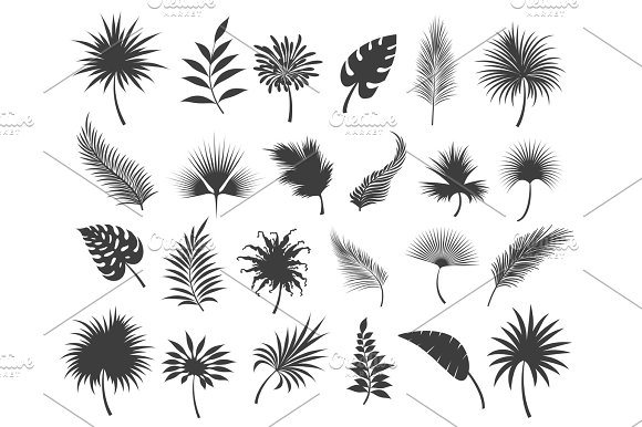 Palms leaves silhouettes