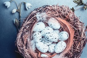 Easter bird eggs in nest on blue