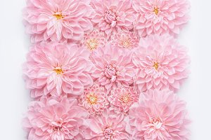 Pink pastel flowers layout on white