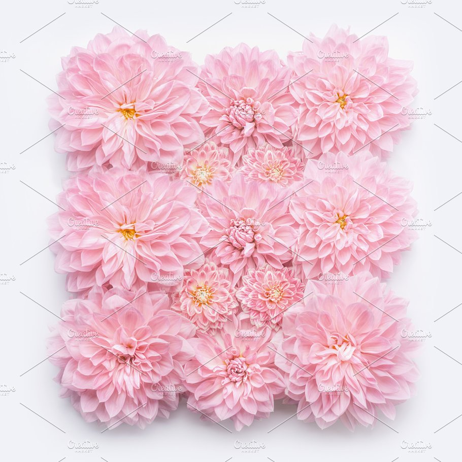 Pink Pastel Flowers Layout On White Arts Entertainment Photos