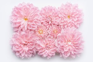Pastel pink flowers layout on white