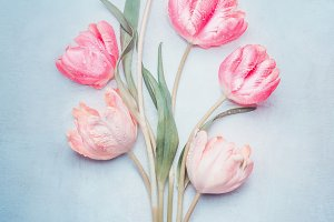 Pastel pink tulips with tag, mock up