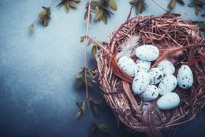 Easter nest with bird eggs on blue